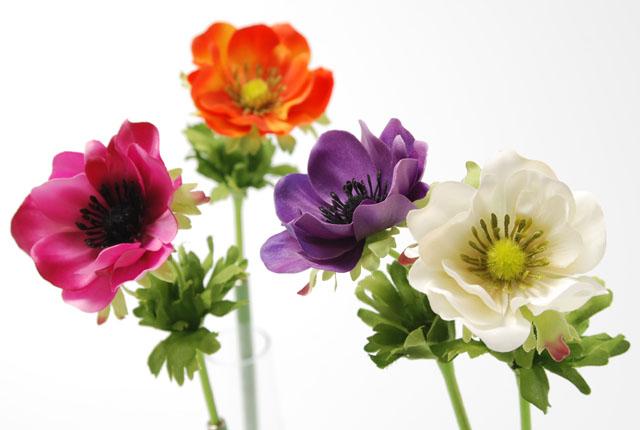 アネモネの色別花言葉