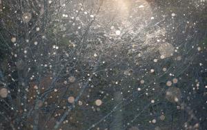 雪虫の大群