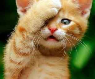 猫舌、原因、治す