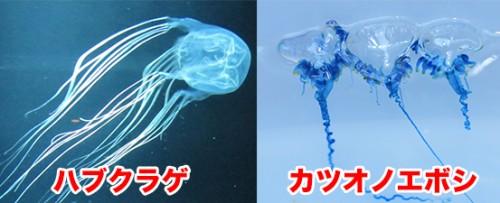 海水浴,危険生物,海,沖縄,毒